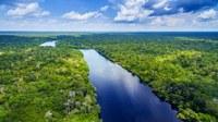 Dia da Amazônia e redução do consumo de plástico. Você sabe qual a relação?