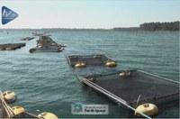 Pescadores e aquicultores planejam aumento da produção de tilápia para atender demanda local