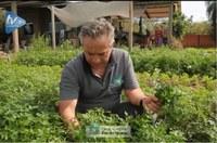 Produtor fala sobre agroecologia e produção de orgânicos em Foz