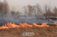 Provocar queimadas e atear fogo em terrenos baldios são crimes ambientais