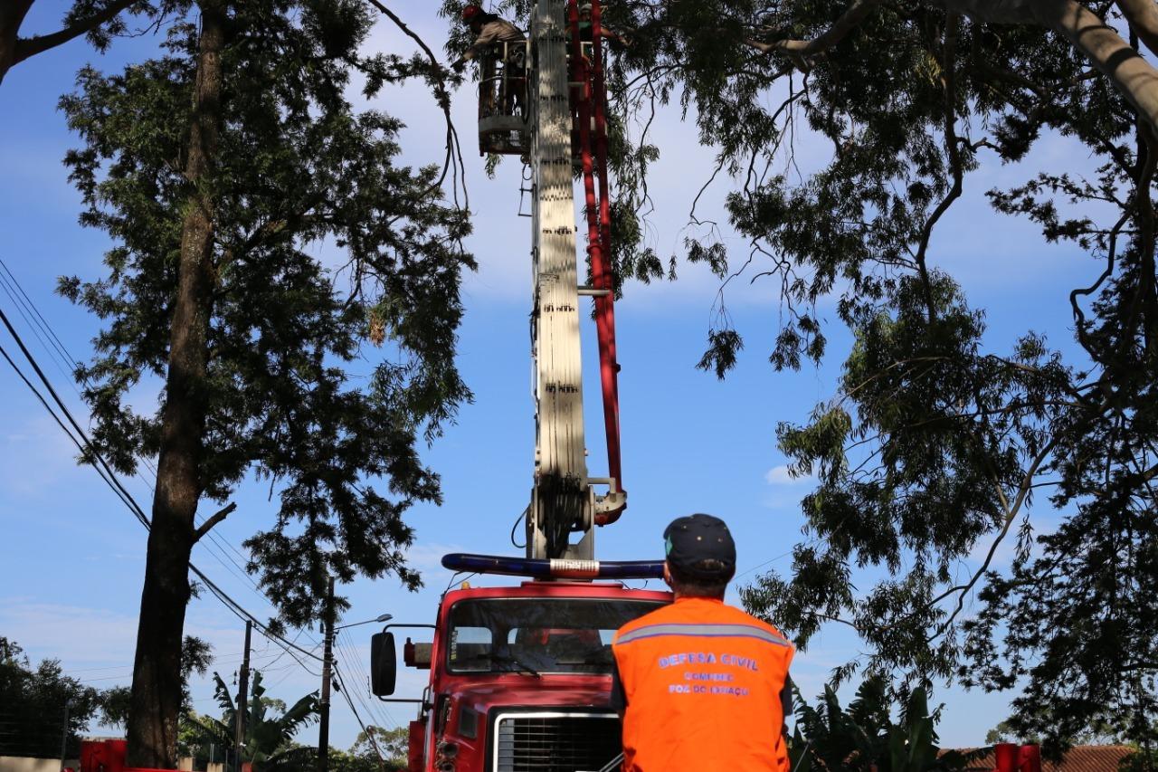 Saiba como solicitar poda de árvores em Foz do Iguaçu